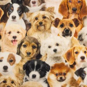 Panama, Hunde, Brauntöne, Schwarz, Offwhite