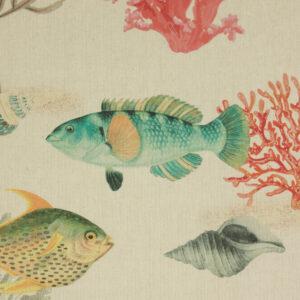 Panama, Fische, Blautöne, Grüntöne, Rottöne, Natur